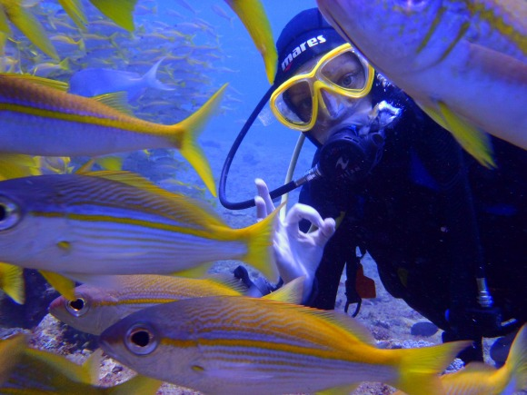 Diving in a World Heritage Site - a once-in-a-lifetime experience!