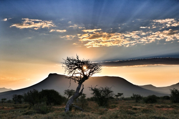 African bush