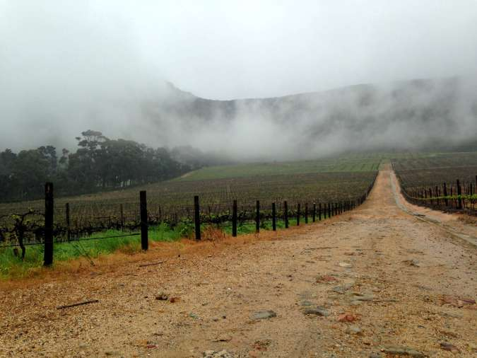 The grey weather made the vineyards look like something out of a fairytale