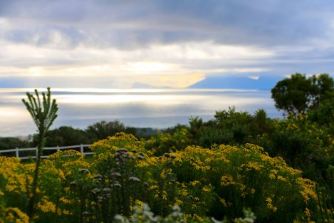 Views from Grootbos Private Nature Reserve