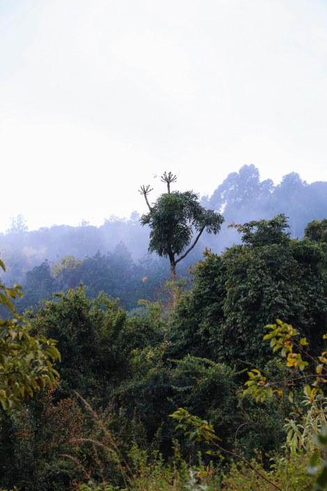 Kurisa Moya forest-1