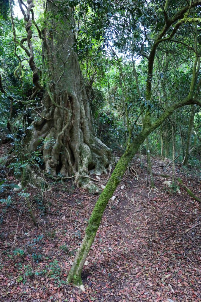 Kurisa Moya forest-3