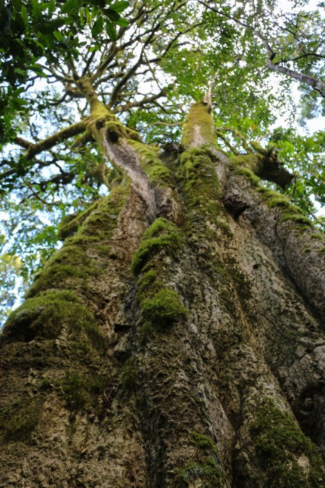 Kurisa Moya forest-5